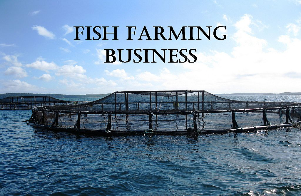 Top 15 Most Profitable Fish Farming Business Ideas for 2019