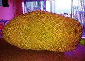 jackfruit processing business ideas