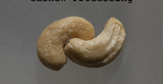 cashew nuts processing business