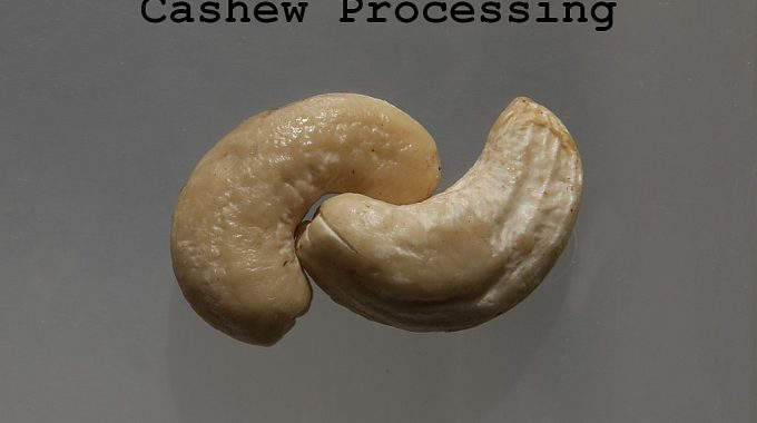 How to Start Cashew Nuts Processing Plant