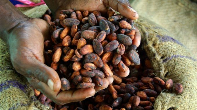 How to Start Cocoa Processing Business