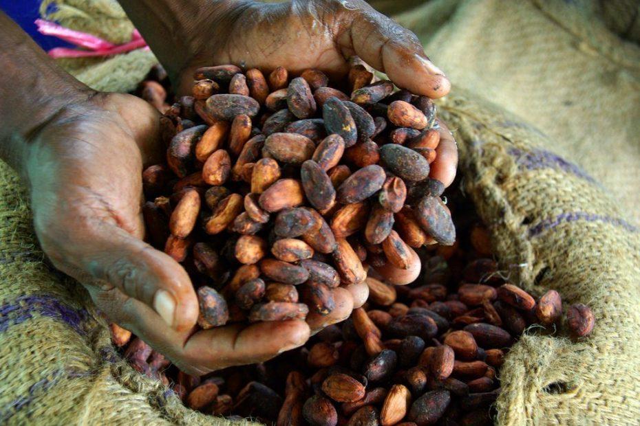 cocoa processing